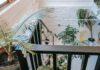 Trappe med en masse planter i hjem